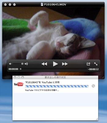 20091006_cat1